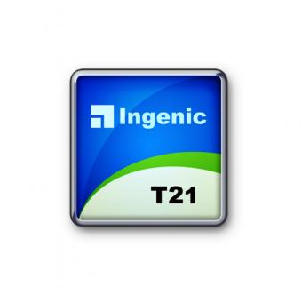 T21 Extreme 2 megapixel encoding processor
